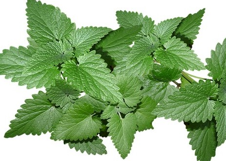 Fresh mint leaves- Heartburn Remedies during pregnancy
